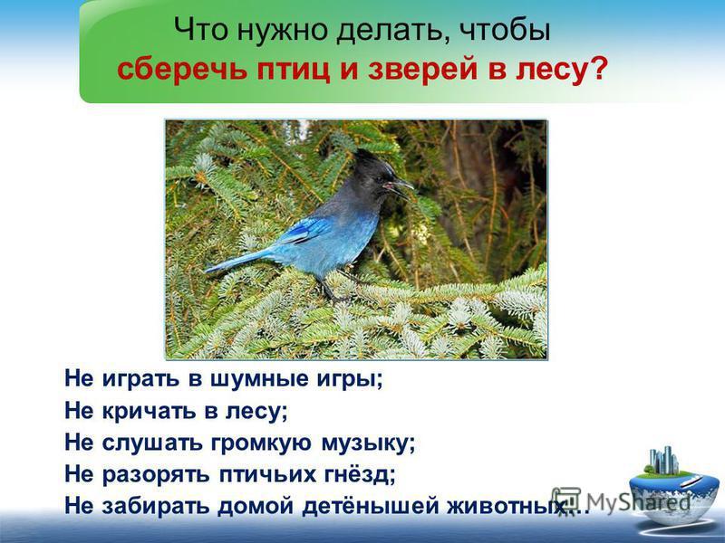 Не играть в шумные игры; Не кричать в лесу; Не слушать громкую музыку; Не разорять птичьих гнёзд; Не забирать домой детёнышей животных… Что нужно делать, чтобы сберечь птиц и зверей в лесу?