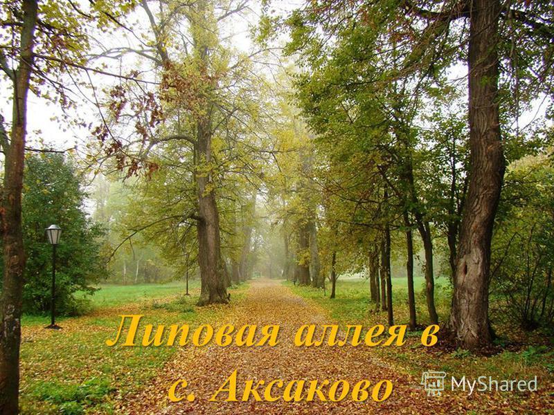 Липовая аллея в с. Аксаково с. Аксаково