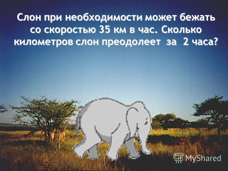 Слон при необходимости может бежать со скоростью 35 км в час. Сколько километров слон преодолеет за 2 часа?