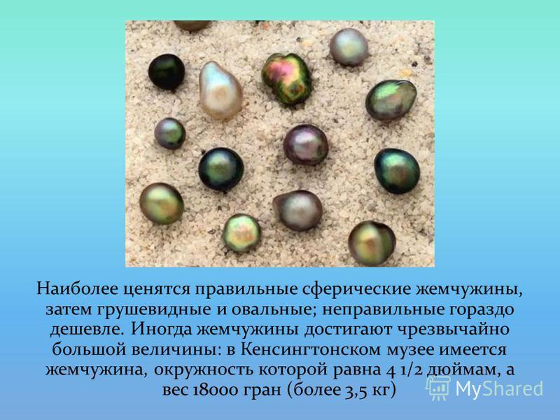 Наиболее ценятся правильные сферические жемчужины, затем грушевидные и овальные; неправильные гораздо дешевле. Иногда жемчужины достигают чрезвычайно большой величины: в Кенсингтонском музее имеется жемчужина, окружность которой равна 4 1/2 дюймам, а