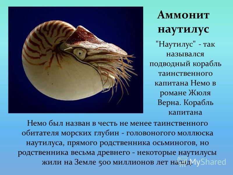 Аммонит наутилус Немо был назван в честь не менее таинственного обитателя морских глубин - головоногого моллюска наутилуса, прямого родственника осьминогов, но родственника весьма древнего - некоторые наутилусы жили на Земле 500 миллионов лет назад.