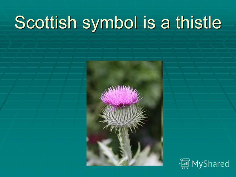 Scottish symbol is a thistle