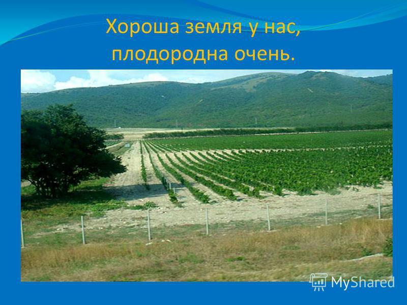 Хороша земля у нас, плодородна очень.