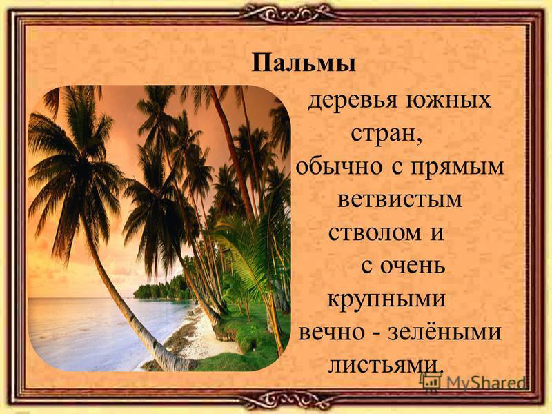 Пальмы деревья южных стран, обычно с прямым ветвистым стволом и с очень крупными вечно - зелёными листьями.