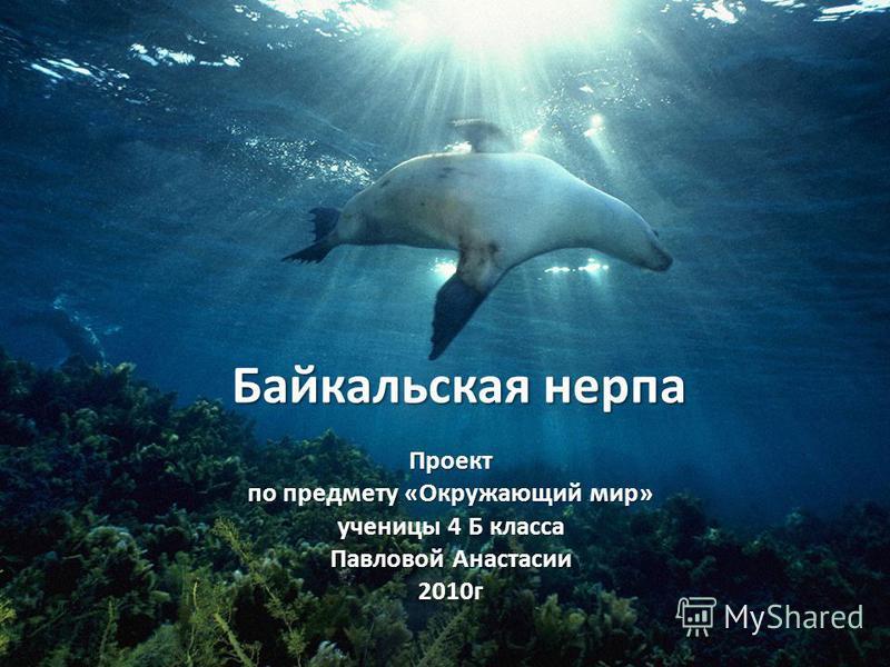 Байкальская нерпа Проект по предмету «Окружающий мир» ученицы 4 Б класса Павловой Анастасии 2010 г