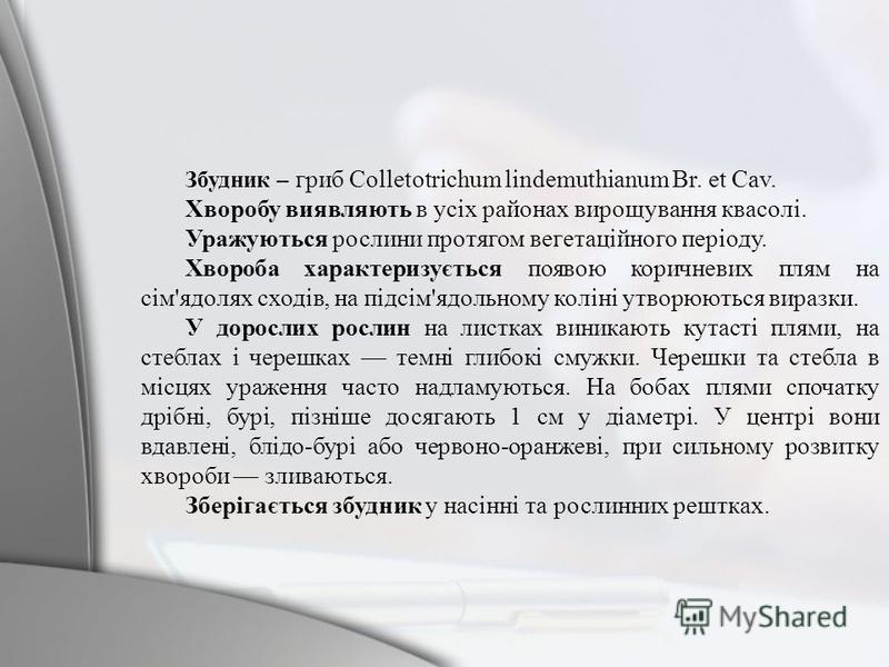 Збудник – гриб Colletotrichum lindemuthianum Br. et Cav. Хворобу виявляють в усіх районах вирощування квасолі. Уражуються рослини протягом вегетаційного періоду. Хвороба характеризується появою коричневих плям на сім'ядолях сходів, на підсім'ядольном