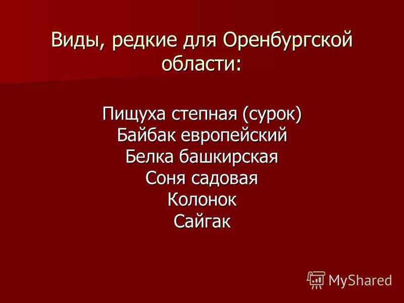 Виды, редкие для Оренбургской области: Пищуха степная (сурок) Байбак европейский Белка башкирская Соня садовая Колонок Сайгак