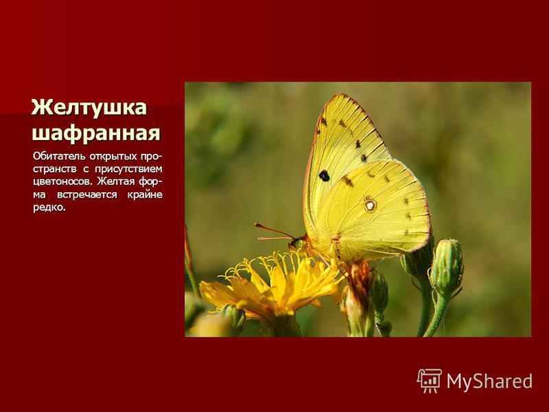 Желтушка шафранная Обитатель открытых про- странств с присутствием цветоносов. Желтая фор- ма встречается крайне редко.