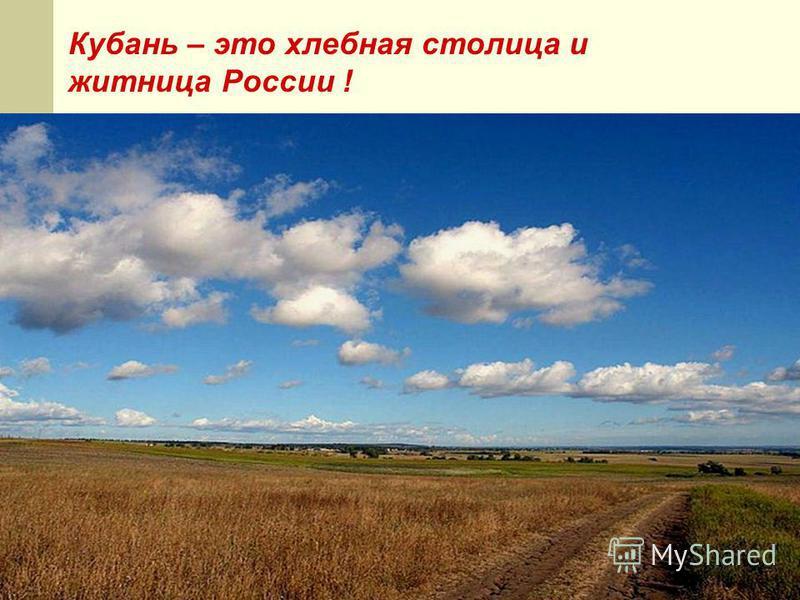 Кубань – это хлебная столица и житница России !