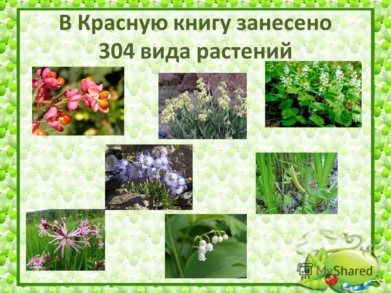 В Красную книгу занесено 304 вида растений