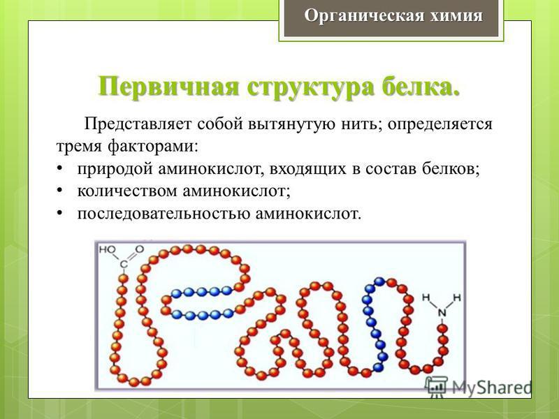 Первичная структура белка. Органическая химия Представляет собой вытянутую нить; определяется тремя факторами: природой аминокислот, входящих в состав белков; количеством аминокислот; последовательностью аминокислот.