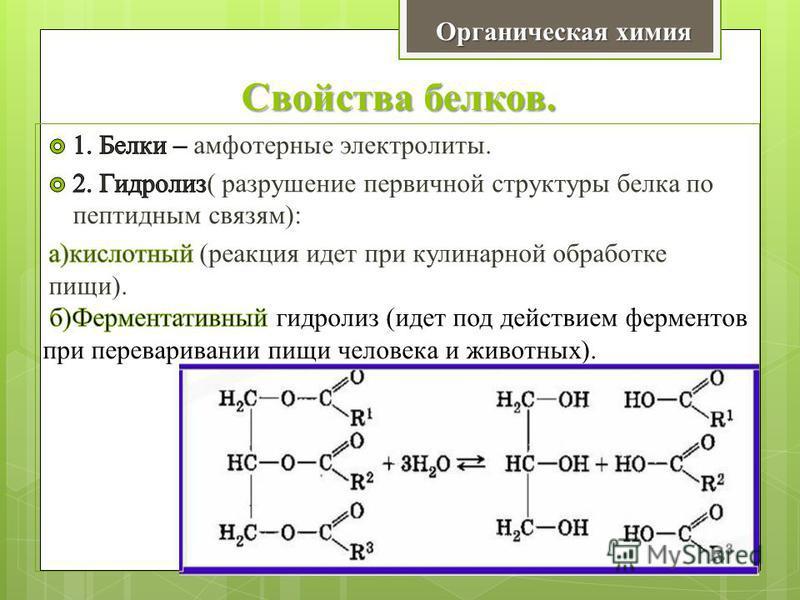 Свойства белков. Органическая химия