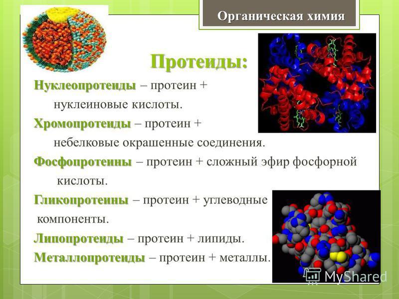 Протеиды: Нуклеопротеиды Нуклеопротеиды – протеин + нуклеиновые кислоты. Хромопротеиды Хромопротеиды – протеин + небелковые окрашенные соединения. Фосфопротеины Фосфопротеины – протеин + сложный эфир фосфорной кислоты. Гликопротеины Гликопротеины – п