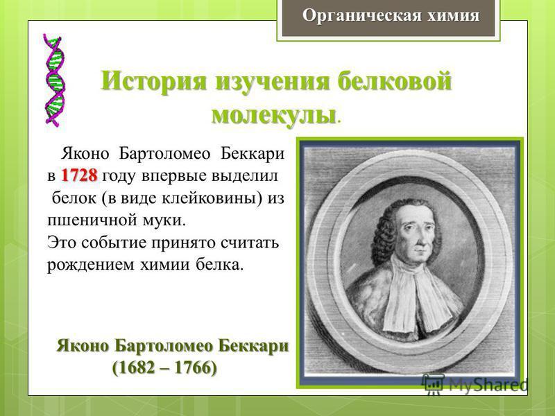 История изучения белковой молекулы История изучения белковой молекулы. Яконо Бартоломео Беккари 1728 в 1728 году впервые выделил белок (в виде клейковины) из пшеничной муки. Это событие принято считать рождением химии белка. Яконо Бартоломео Беккари