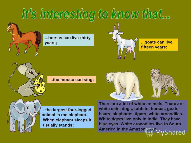 ...horses can live thirty years;...the mouse can sing;...the largest four-legged animal is the elephant. When elephant sleeps it usually stands;...goats can live fifteen years; There are a lot of white animals. There are white cats, dogs, rabbits, ho