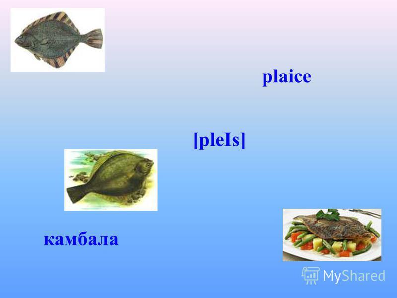 plaice [pleІs] камбала