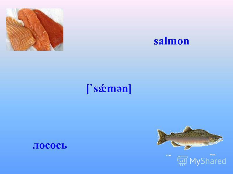 salmon [`sǽmən] лосось