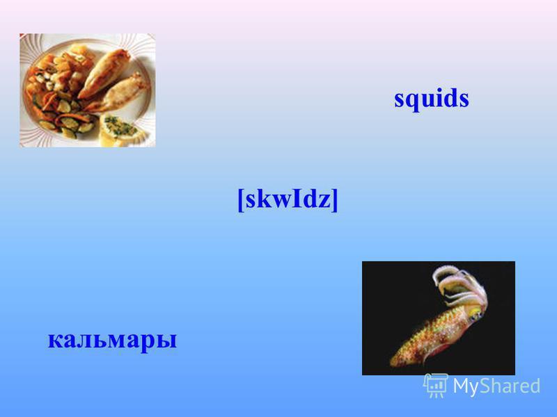 squids [skwІdz] кальмары