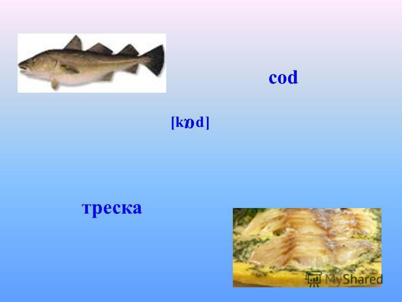 cod [k α d] треска