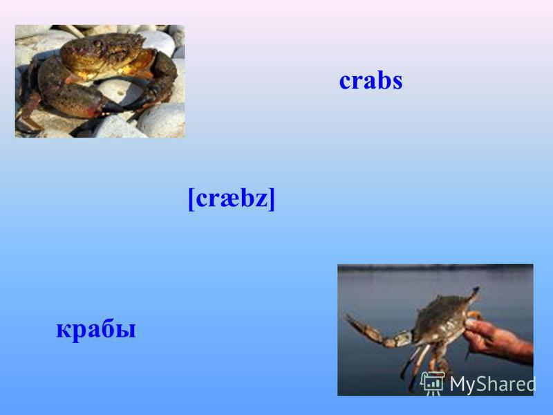 crabs крабы [cræbz]
