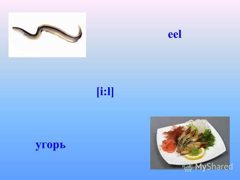 eel [i:l] угорь