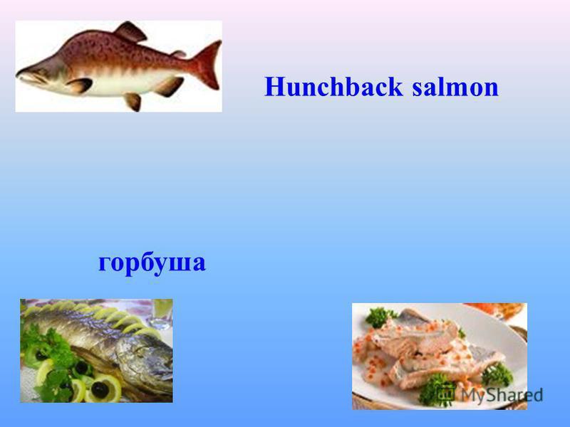Hunchback salmon горбуша