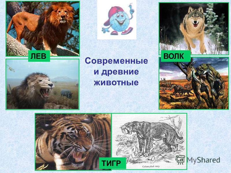 Современные и древние животные ЛЕВВОЛК ТИГР