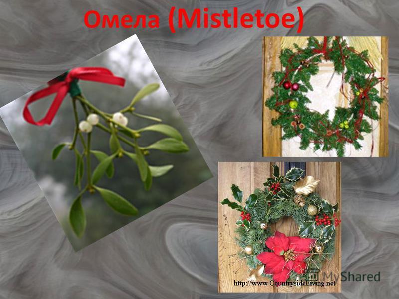 Омела (Mistletoe)