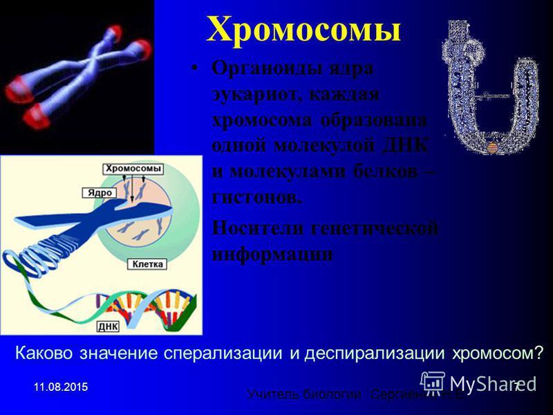 Хромосомы Органоиды ядра эукариот, каждая хромосома образована одной молекулой ДНК и молекулами белков – гистонов. Носители генетической информации Каково значение спирализации и деспирализации хромосом? 11.08.20157 Учитель биологии Сергиенко Н.В.