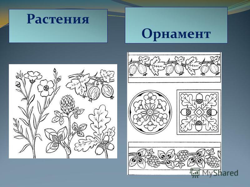 Растения Орнамент
