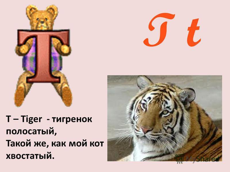 T t Т – Tiger - тигренок полосатый, Такой же, как мой кот хвостатый.