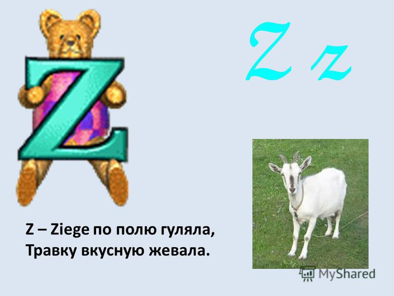Z z Z – Ziege по полю гуляла, Травку вкусную жевала.