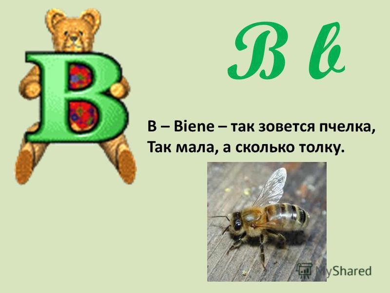 B b В – Biene – так зовется пчелка, Так мала, а сколько толку.