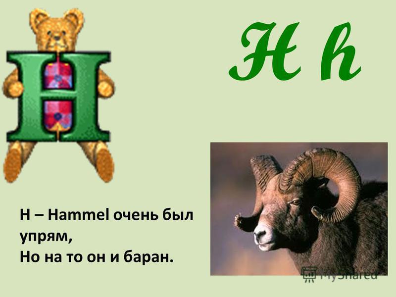 H h Н – Hammel очень был упрям, Но на то он и баран.