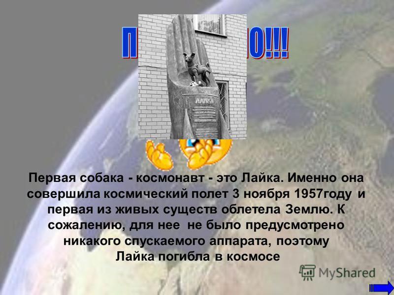 Собака Лайка Кот Феликс Обезьянка Сэм Беличья обезьяна Бейкер