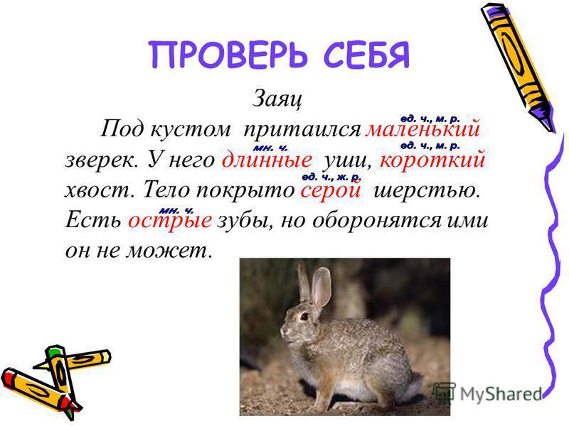 ПРОВЕРЬ СЕБЯ Заяц Под кустом притаился маленький зверек. У него длинние уши, короткий хвост. Тело покрыто серой шерстью. Есть острие зубы, но оборонятся ими он не может.