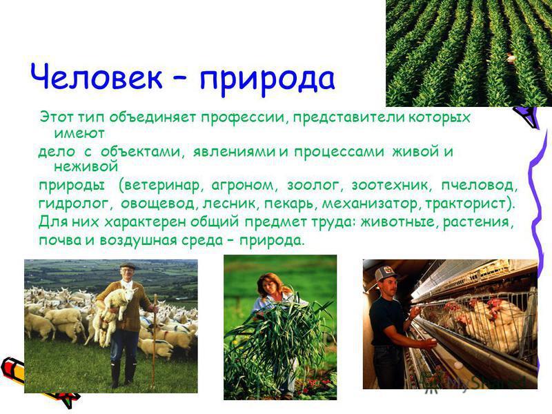 Человек – природа Этот тип объединяет профессии, представители которых имеют дело с объектами, явлениями и процессами живой и неживой природы (ветеринар, агроном, зоолог, зоотехник, пчеловод, гидролог, овощевод, лесник, пекарь, механизатор, тракторис