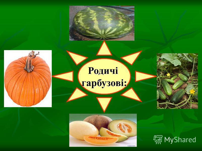Родичігарбузові: