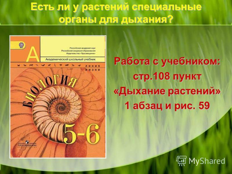 Есть ли у растений специальные органы для дыхания? Работа с учебником: стр.108 пункт «Дыхание растений» 1 абзац и рис. 59