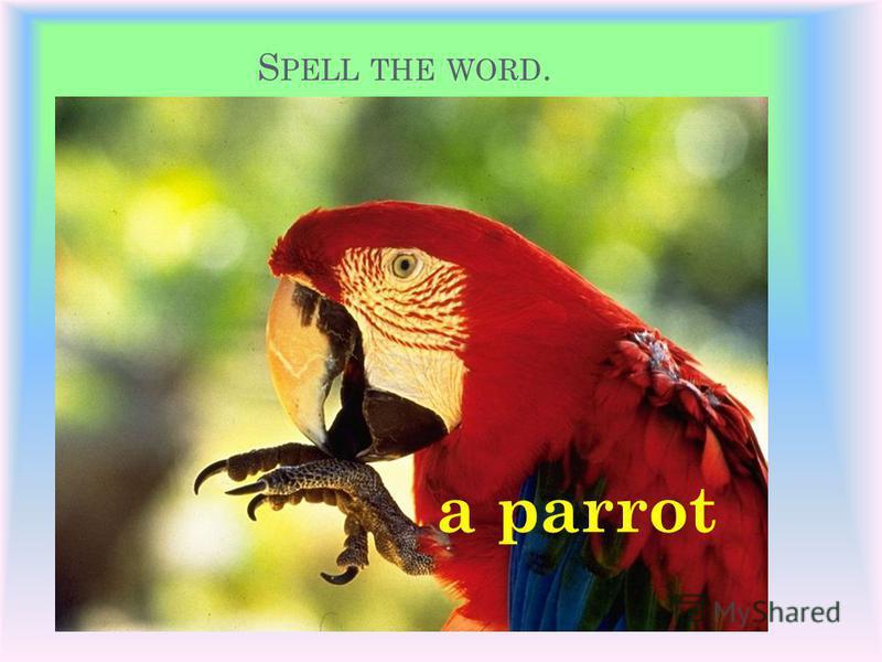 S PELL THE WORD. a fox a pig a cock a lion a monkey a parrot