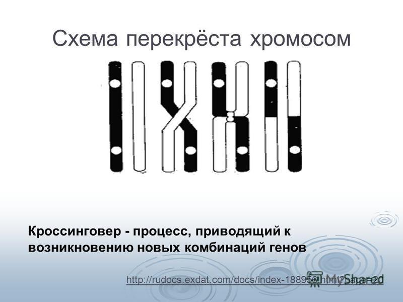 Схема перекрёста хромосом Кроссинговер - процесс, приводящий к возникновению новых комбинаций генов http://rudocs.exdat.com/docs/index-188956.html?page=20