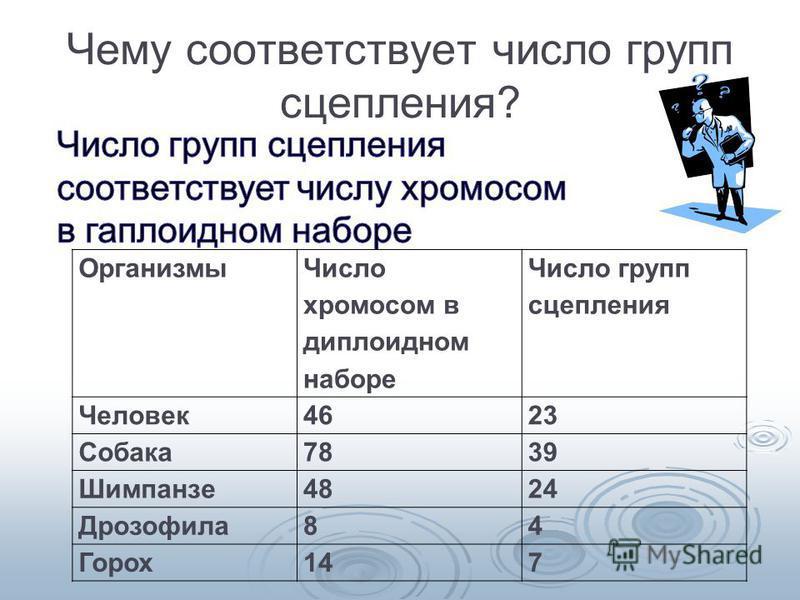 Чему соответствует число групп сцепления? Организмы Число хромосом в диплоидном наборе Число групп сцепления Человек 4623 Собака 7839 Шимпанзе 4824 Дрозофила 84 Горох 147