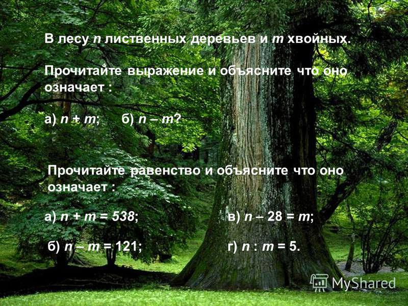 В лесу n лиственных деревьев и m хвойных. Прочитайте выражение и объясните что оно означает : а) n + m;б) n – m? в) n – 28 = m; г) n : m = 5. а) n + m = 538; б) n – m = 121; Прочитайте равенство и объясните что оно означает :