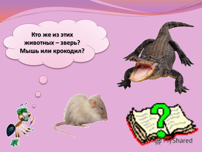 Кто же из этих животных – зверь? Мышь или крокодил?