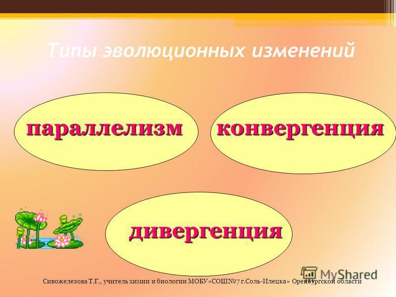 Типы эволюционных изменений параллелизм конвергенция дивергенция Сивожелезова Т.Г., учитель химии и биологии МОБУ»СОШ7 г.Соль-Илецка» Оренбургской области