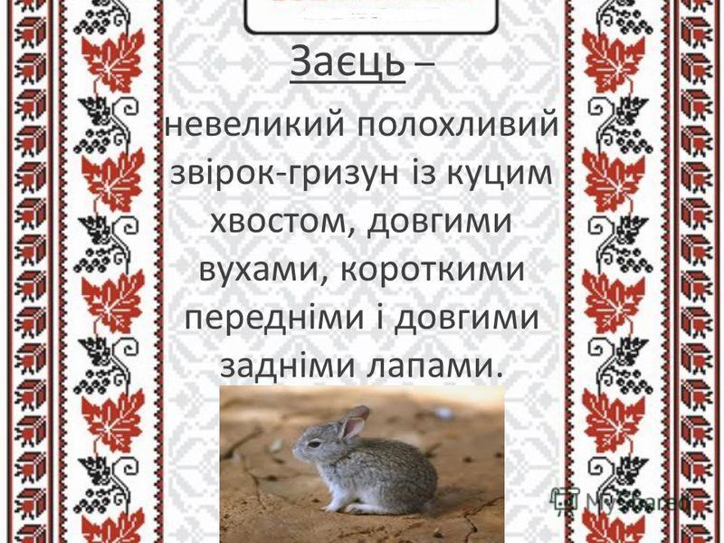 Заєць – невеликий полохливий звірок-гризун із куцим хвостом, довгими вухами, короткими передніми і довгими задніми лапами.