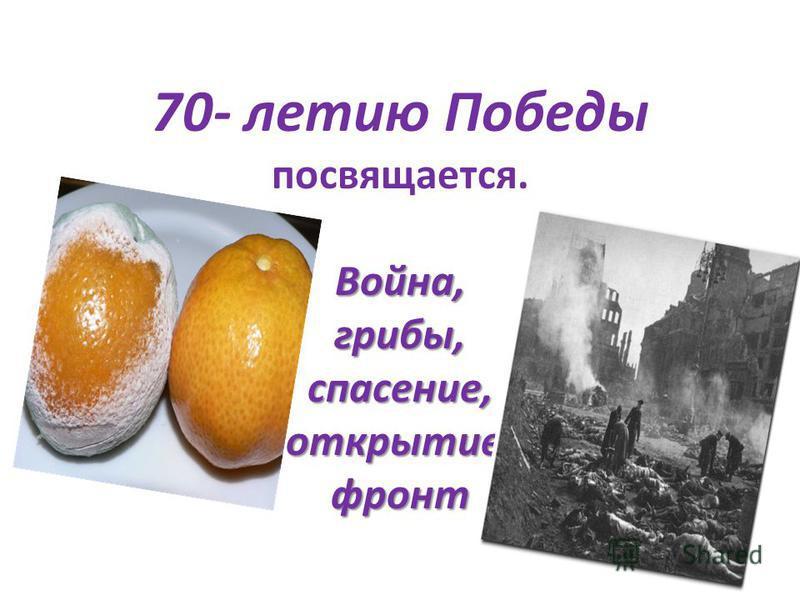Война, грибы, спасение, открытие, фронт 70- летию Победы посвящается. Война, грибы, спасение, открытие, фронт
