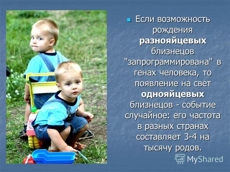 Если возможность рождения разнояйцевых близнецов