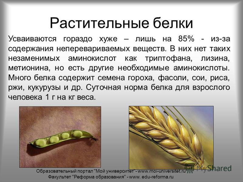 Растительные белки Усваиваются гораздо хуже – лишь на 85% - из-за содержания неперевариваемых веществ. В них нет таких незаменимых аминокислот как триптофана, лизина, метионина, но есть другие необходимые аминокислоты. Много белка содержит семена гор