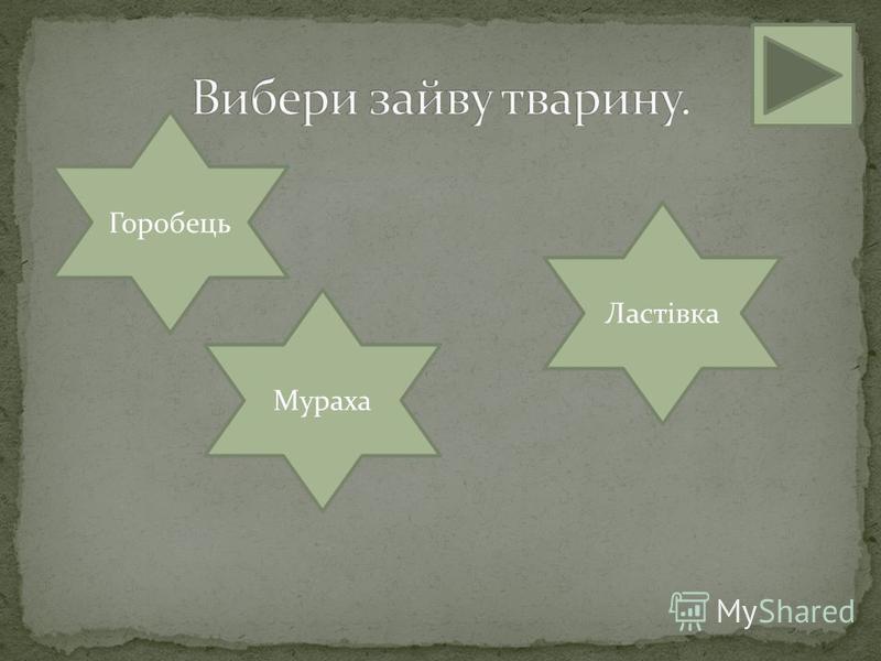 Мураха Ластівка Горобець